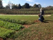 "We also had the chance to visit the new farm on the Guilford College campus, built since I graduated and now supplying the cafeteria, local CSA members, and soon a ""mobile farmer's market"" in Greensboro's food deserts."